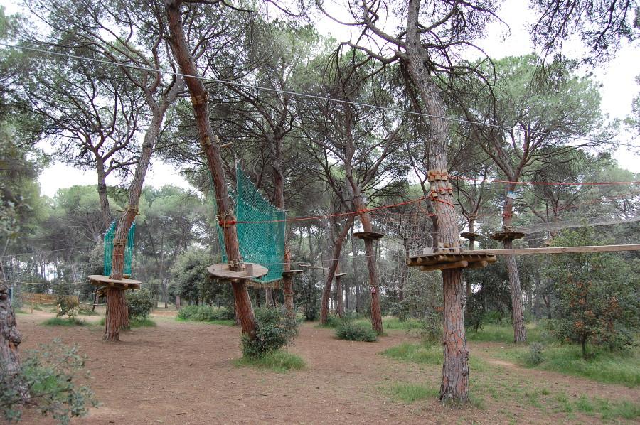 circuit arbres